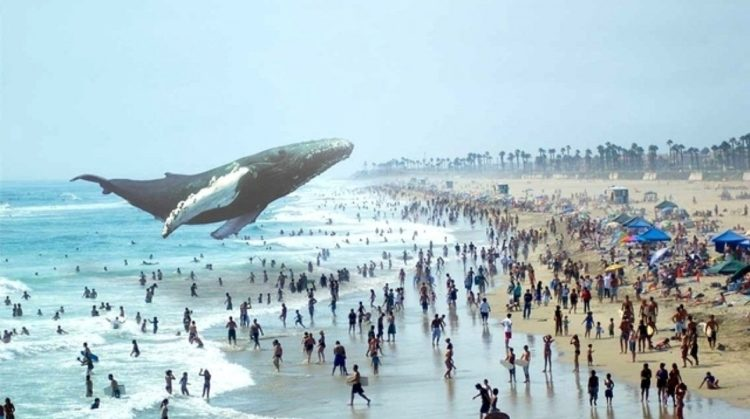 magic-leap-baleine-plage