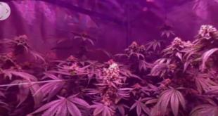cannabis réalité virtuelle vr addiction santé science thérapie