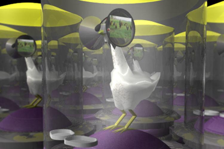 Poulets casques de réalité virtuelle