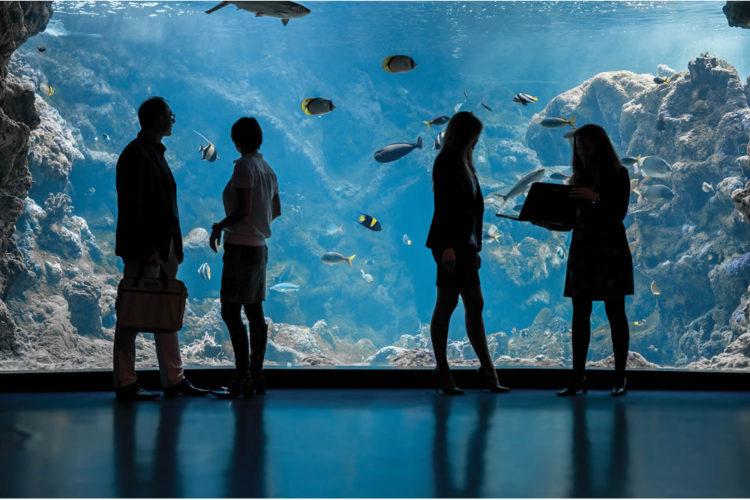 Océanopolis expérience en réalité virtuelle