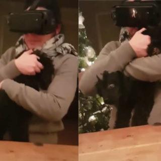 Femme chien VR, vidéo drôle amusante