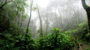 forêt amazonienne réalité augmentée